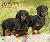 Dachshunds - For the love of 2019 - Dackel: Original BrownTrout-Kalender - Deluxe