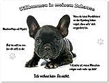 Merchandise for Fans Blechschild/Warnschild / Fun Türschild - Willkommen in Meinem Zuhause - Motiv: Französische Bulldogge Welpe schwarz - 08 - (20x30cm)