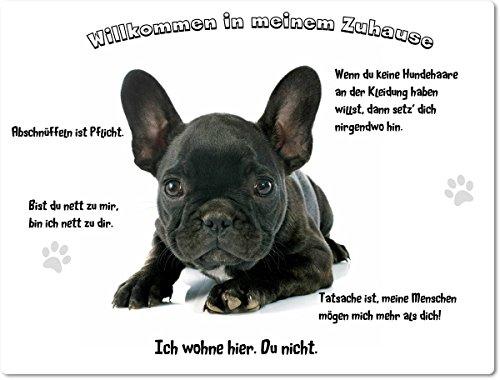 Merchandise for Fans Blechschild/Warnschild/Fun Türschild -Willkommen in meinem Zuhause - Motiv: Französische Bulldogge Welpe schwarz - 08 - (20x30cm) (Bulldogge 0.5)