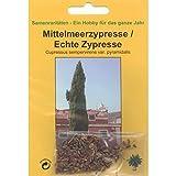 Bonsai - 100 Samen Cupressus sempervirens var. pyramidalis, Mittelmeerzypresse, Echte Zypresse, 90092