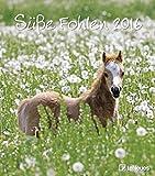 Süße Fohlen 2016- Wandkalender/Tierkalender/ Pferde - 30 x 34 cm