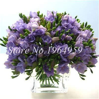 Shopmeeko Graines: Vase spécial coloré Bonsai Fleur Freesia Bonsai Décor rare orchidée Illuminez votre jardin personnel Bonsai 100 Pcs/Sac: 14