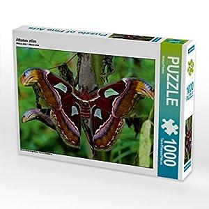 CALVENDO Puzzle Attacus Atlas 1000 Piezas tamaño 64 x 48 cm Foto de Puzzle de Foto de Photon Vronja