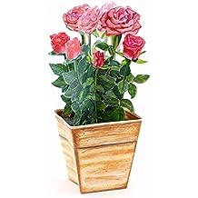 """""""BLUMENTOPF MIT ROSA-ROTEN ROSEN"""": 3 D Pop-Up-Karte mit einem Topf Rosen, die niemals verblühen - ideal als Geburtstagskarte oder Valentinskarte"""