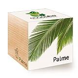 Feel Green Ecocube Palme, Nachhaltige Geschenkidee (100% Eco Friendly), Grow Your Own/Anzuchtset, Pflanzen Im Holzwürfel, Made in Austria