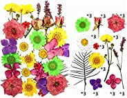 مجموعة زهور مجففة طبيعية من ايليكودون لصناعة الصابون والشموع والراتنيج والمجوهرات (متعددة الالوان ارجواني واخض