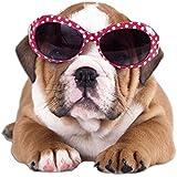 pegatinas de pared animales de la pared decoración perro bulldog gafas de sol (58x57cm)