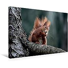 Premium Textil-Leinwand 45 cm x 30 cm quer, Eichhörnchen   Wandbild, Bild auf Keilrahmen, Fertigbild auf echter Leinwand, Leinwanddruck: Eichhörnchen beim Nuss verzehren (CALVENDO Tiere)