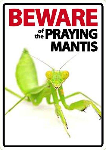 Beware of the Praying Mantis - Flexi - Pet-mantis