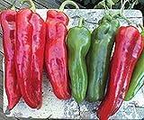 Las semillas orgánicas: 1000 - Poblano L pimienta caliente se: a granel de Se Semillas (1000) - Pimienta ellos o re-venderlos !! PE PE PE por Farmerly