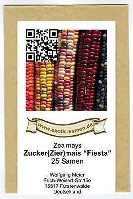 Zuckermais - Ziemais - Indianermais - Fiesta - 25 Samen von exotic-samen auf Du und dein Garten
