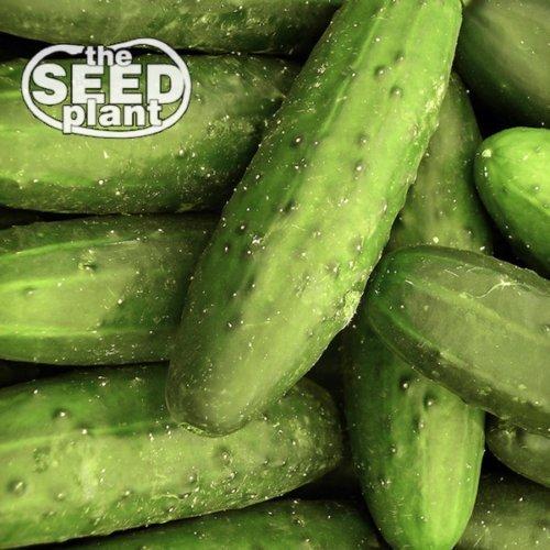 Ashley Long Concombre Seeds - 50 graines