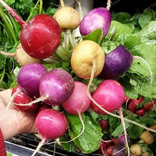 Bloom Green Co. Cherry Belle Radis Bonsai haute qualité facile à cultiver des légumes bio Bonsai extérieur Cache-pot pour Accueil Jardin 50 Pcs/Sac: 12