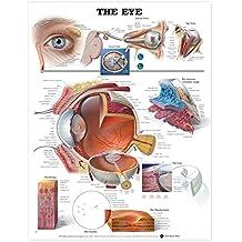 Eye Anatomical Chart
