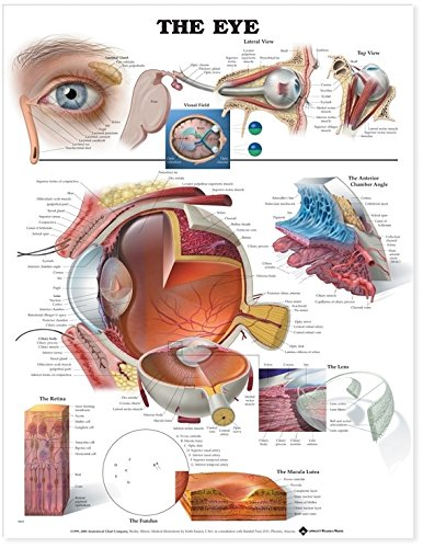 Eye Anatomical Chart por Anatomical Chart Company