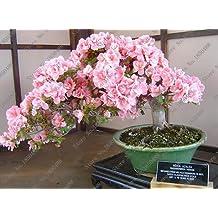 Suchergebnis auf f r japanische gartenpflanzen - Japanische gartenpflanzen ...