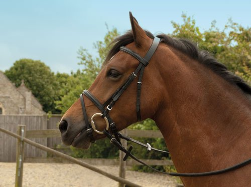 Windsor Equestrian Horses Leather Bridle 1
