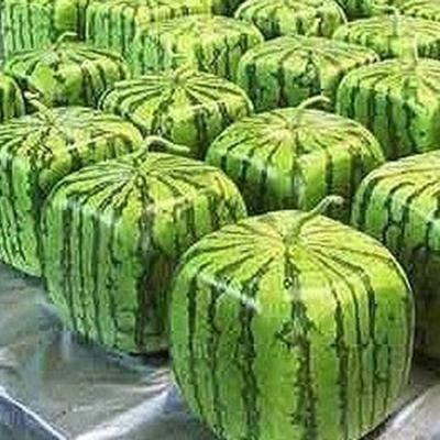 Shopmeeko Samen: Bonsai Hot Verkauf 30pcsseeds / pack 11 Arten Seltene chinesische Wassermelone wählen Köstlicher Frucht-Wassermelone Bonsaipflanzen: Hellgelb