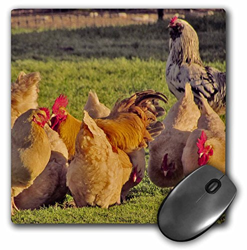 jackie-popp-birds-red-hens-and-roosters-mousepad-mp-195204-1