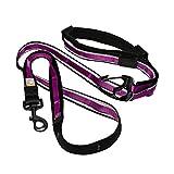 Kurgo 6Quantum (TM) Hände frei Hund Leine für Walking, Laufen oder Wandern & Reflektierende Hundeleine mit Verstellbare Taille Gürtel, Raspberry
