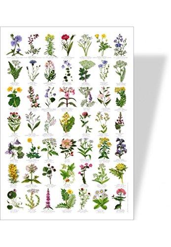 achat-nature-poster-nature-fleurs