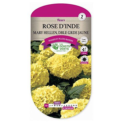 Les doigts verts Semence Rose d'Inde Mary Hellen Double Grande Jaune