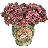 Sanysis - 72 cabezas Gypsophila de flores artificiales hortensias