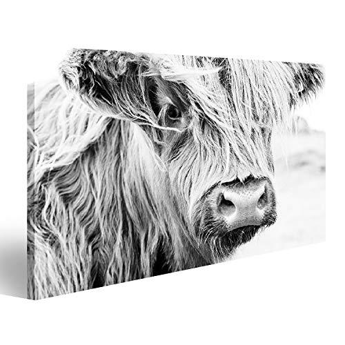 islandburner Bild auf Acrylglas Schottische Kuh im grünen Gras, Wandbild Acrylglasbild Glasbild URF