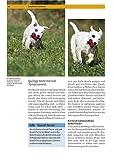 Parson und Jack Russell Terrier: Auswahl, Haltung, Erziehung, Beschäftigung (Praxiswissen Hund) - 4