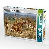 Familientag – Eine Gruppe von Giraffen 1000 Teile Puzzle quer: Netzgiraffe (Giraffa reticulata), Kenia, Afrika (CALVENDO Tiere)