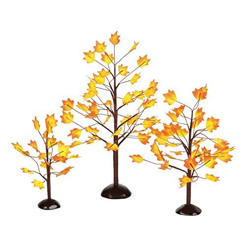 e Herbst-Ahornbäume, 3 Stück ()