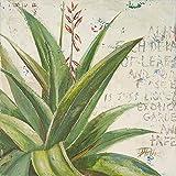 Rahmen-Kunst Keilrahmen-Bild – Patricia Pinto: Aloe II Leinwandbild Kakteen Sukkulenten Botanik