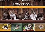 Katzenkinder - Britisch Kurzhaar (Wandkalender 2019 DIN A3 quer): Katzenkalender mit traumhaften Fotos kleiner Britenkinder. (Monatskalender, 14 Seiten ) (CALVENDO Tiere)