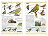 Vögel in Europa: Über 500 Arten mit Vogelstimmen-CD - 4