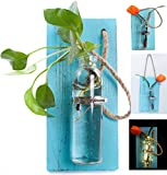 Rustic Home Décor Wall Art Decoration Solid Wooden Board (Retro polished) Hanging Planters Wall Vases Hydroponic Plants Hanging Glassware for Home Garden Living Room Decor by Eanjia (no flower) (Blue sky)