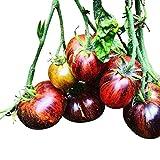 Tomate *DARK GALAXY* 10 Samen -Fruchtig & Süß-