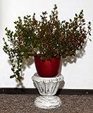 Blumensäule Holz Blumenständer mediterraner Stil Blumentisch BLST05