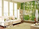 Komar - Vlies Fototapete SUNDAY - 368 x 248 cm - Tapete, Wand, Dekoration, Wandbelag, Wandbild, Wanddeko, Wald, Birkenwald - XXL4-519
