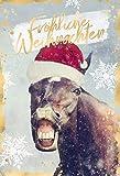 Weihnachten lustig   Weihnachtskarten   Weihnachtskarte   Weihnachtskarten mit Umschlag Set   DIN A6   17,1 x 11,7cm   Motiv: Pferd