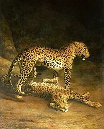 Jacques-Laurent Agasse - Two Leopards Lying In The Exeter Exchange Kunstdruck (60,96 x 76,20 cm) Laurent Leopard