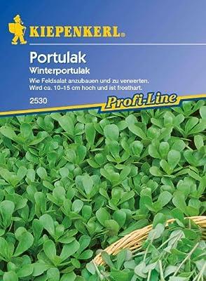 Portulak, 'Winterportulak' von Kiepenkerl - Du und dein Garten