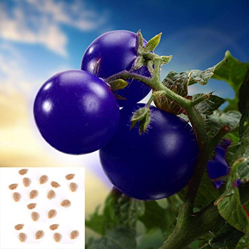 Cravog 1 Sac 20 Graines Violet Tomate Graines Sac Fruits Légumes Pour Votre Vie Sain