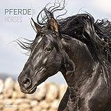 Pferde 2019 - Horses - Broschürenkalender (30 x 60 geöffnet) - Tierkalender - Wandplaner
