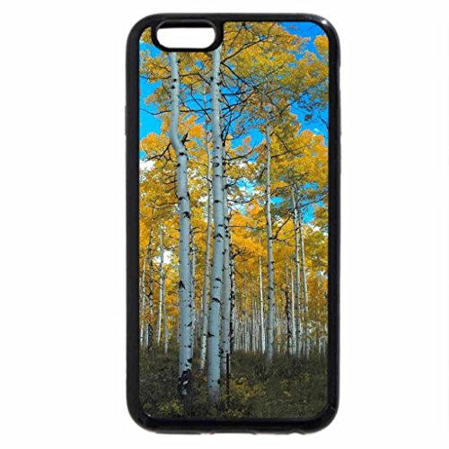 iPhone 6S / iPhone 6 Case (Black) Sacred Aspens