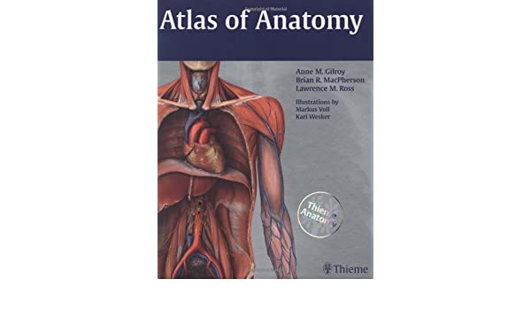 Atlas of Anatomy (Thieme Anatomy): Amazon.de: Anne M. Gilroy, Brian ...