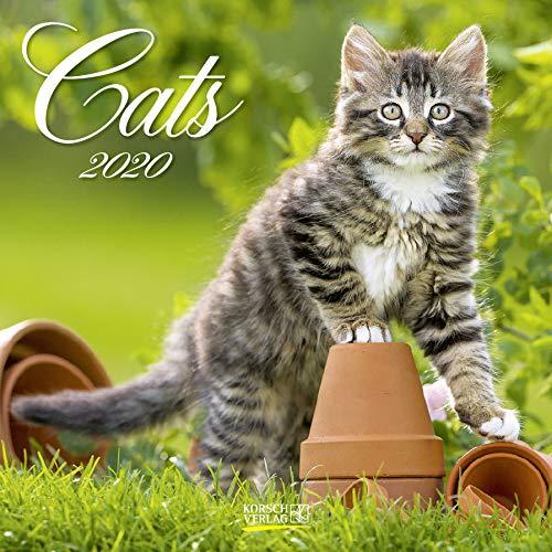 Cats 2020: Broschürenkalender mit Ferienterminen. Katzen und Kätzchen