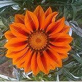 100pcs / bag del arco iris del crisantemo Semillas de flores ornamentales Semillas Semillas Bonsai raras del jardín de DIY Flor Amarillo gratuito de envío