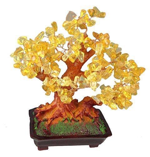Geldbaum Größe