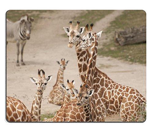 MSD Mousepad Bild-ID 20143632Giraffe -