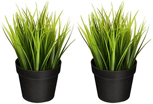Kit 2 Plantas del Trigo